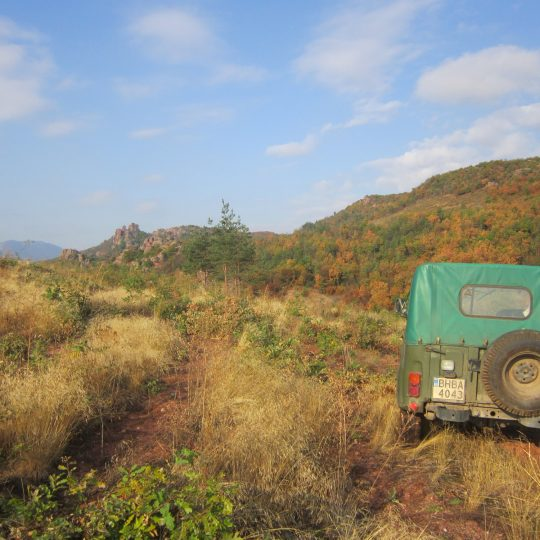 http://complexmagura.com/wp-content/uploads/2016/11/Magura-safari2-540x540.jpg